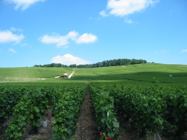 Trigny Vineyards – Champagne, France