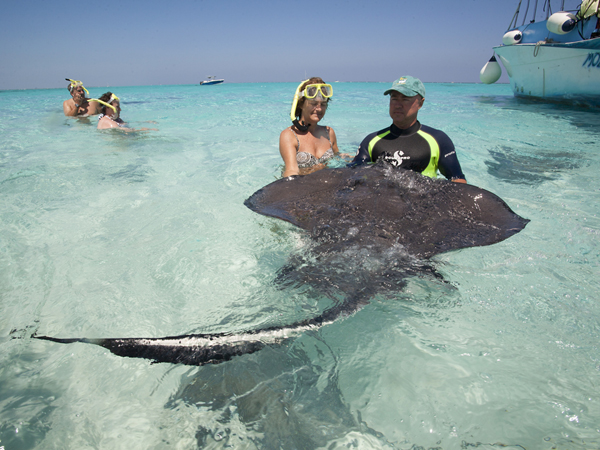 Stingray City, a popular offshore sandbar where stingrays have become habituated to humans allowing them to swim safely alongside the animals.