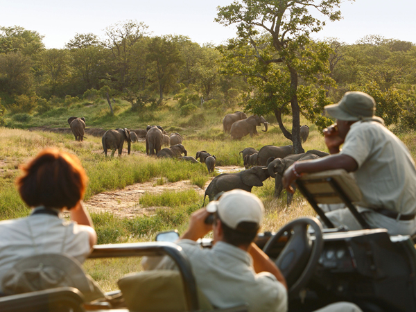 Suedafrika, Nationalparks, Kruger National Park, Ngala Privat Game Reserve, Game Drive, Elefantenherde in Flussbett nahe der Lodge, Elefant, Elefanten, Tier, Tierwelt, Tiere, Wildlife, Landschaft, Aussicht, Ausflug, Safari, Afrika, 04/2006, QF; (Bildtechnik: sRGB, 36.39 MByte vorhanden) English: South Africa, Kruger National Park, Ngala Private Game Reserve, Game Drive, herd of elephants in riverbed near Lodge, elephant, animals, wildlife, landscape, nature, excursion, safari, April 2006