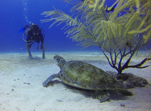 diver-549369_960_720