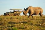 rhino-and-truck-740x492