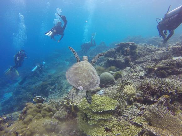 scuba-diving-1300848_960_720