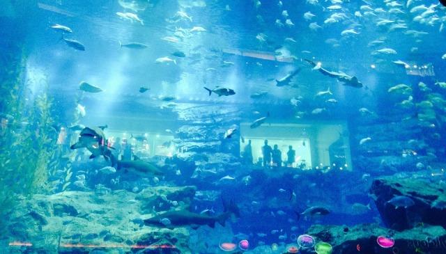 Aquarium Fish Dubai
